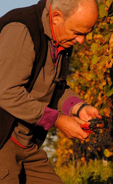 Domaine Bourdieu - vin bio Lorient